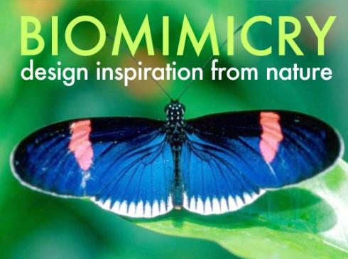 BiomimicryVeer